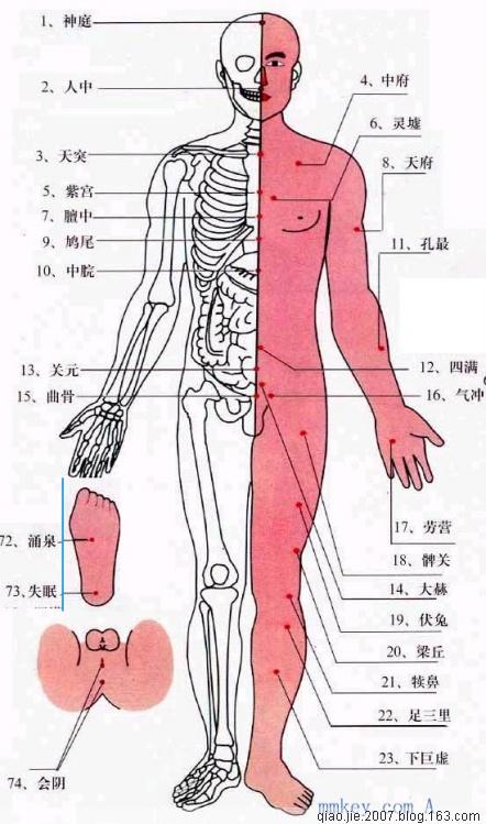 五脏六腑分布图图片 五脏六腑图, 解剖图五脏六腑 高清图片