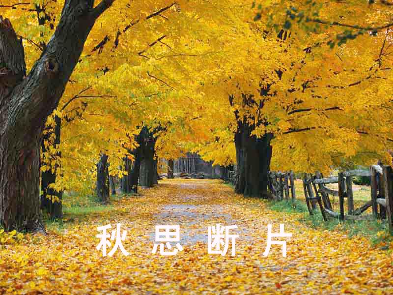 秋叶 钢琴曲